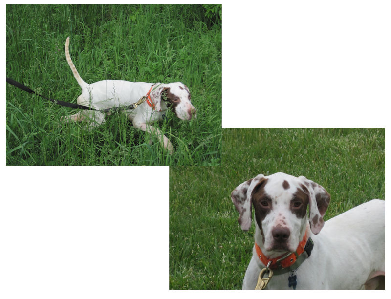 Pointer Rescue -- helping to make a difference