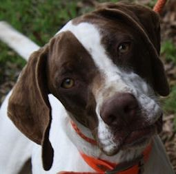 Support Pointer Rescue